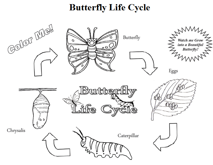 Here Is A FREE Butterfly Life Cycle Coloring Page