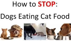Dogs Eating Cat Food