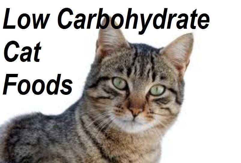 Cat Food Wet Or Dry Or Both