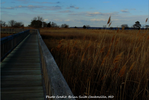 Travel Guide to Maryland's Eastern Shore