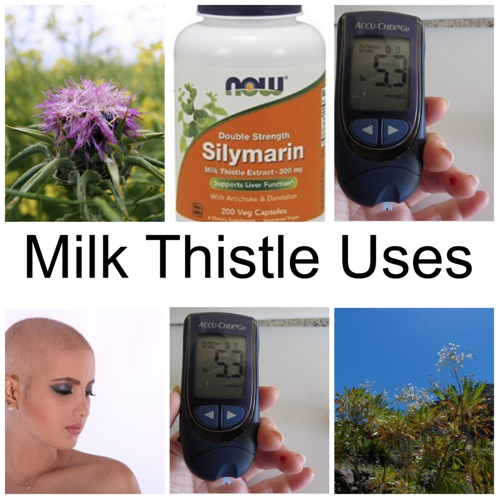 Milk Thistle Uses