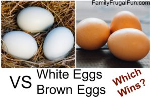 White-Eggs-VS-Brown-Eggs-1024x661-1