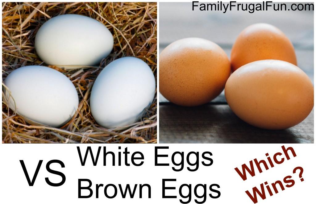 White Eggs VS Brown Eggs