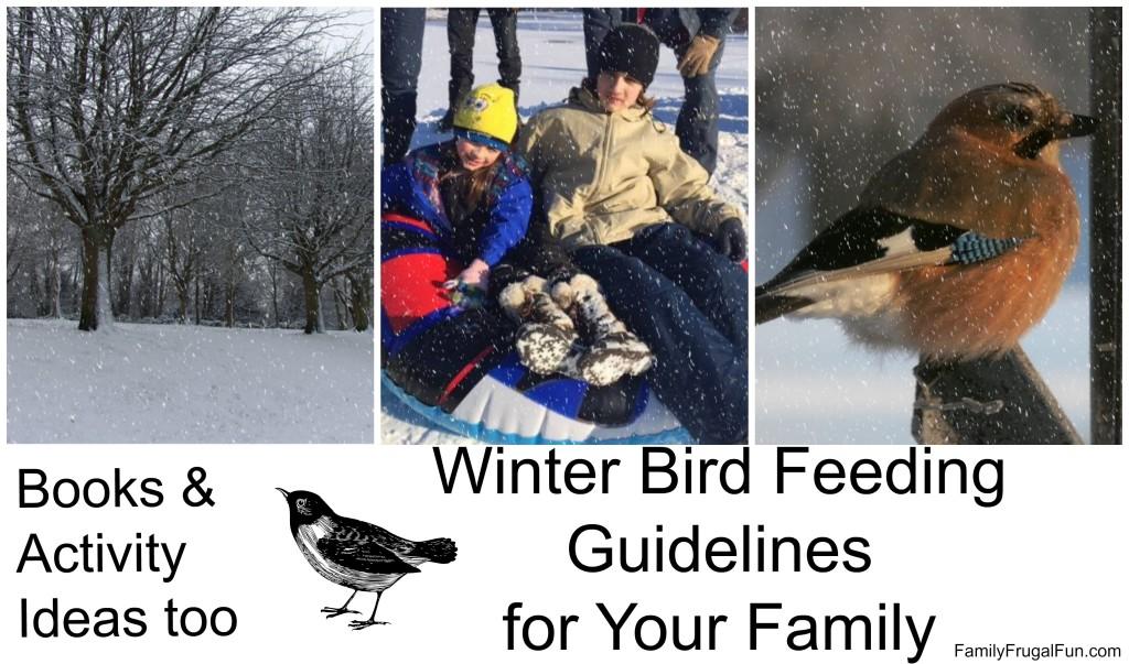 Winter bird feeding '